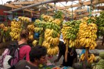 14_Lots_of_bananas_on_the_market