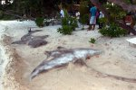 25_Sandanimals_for_our_second_dinner_on_Dhangethi