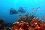 13_Johanna_and_Daniel_diving_at_coral_garden_Himmiya_Faru_in-Male_Atoll