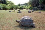 28_The_tortoise_canyon_where_more_than_300_individuals_of_Aldabra_tortoises_(Aldabrachelys_gigantea)_live