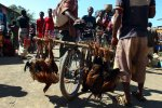 20_Chicken_are_transported_on_the_bicycle_alive