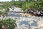 15_You_can_find_a_gfew_turtle_nests_on_the_beach