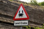 23_Crabs_do_not_care_about_cars_but_we_should_take_care_of_them