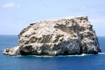 31_After_cats_were_introduced_on_Ascension_most_of_the_birds_only_nested_on_this_huge_rock_called_Boatswain_Island