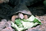 13_One_year_old_tortoise_at_the_breeding_center_on_Isabela