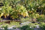 21_Eventhough_there_are_a_lot_of_coconut_palms_there_is_still_some_of_the_original_flora_left